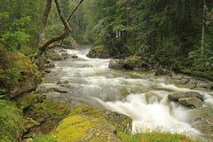 regnflod Royaltyfria Foton