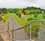 Regnig dag i parkera Wilson australasian Royaltyfri Bild
