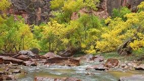 Regnig dag på den jungfruliga floden i Zion Canyon arkivfilmer