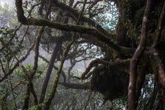 Regnig dag på den mossiga skogen Arkivfoto