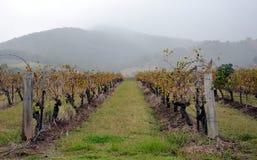Regnig dag på vingård Fotografering för Bildbyråer