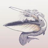 Regnig pelikan Royaltyfri Foto