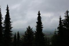 regnig skog Arkivbild