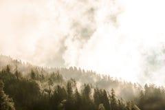 Regnig skog i höst Arkivbild