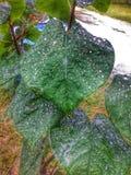 Regnig sommardag royaltyfri foto