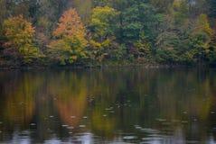 Regniga Autumn Day på Grayson Lake Royaltyfria Foton