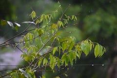 Regniga blad arkivbild