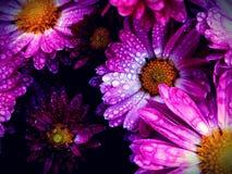 Regniga blommor royaltyfri fotografi