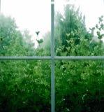 Regnigt fönster med växter arkivfoto