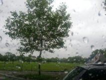 Regnigt läge royaltyfria foton