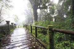 Regnigt spår i berg Royaltyfri Bild