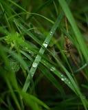 Regnnedgång på ett grässtrå royaltyfri bild