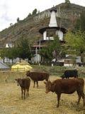 Regno del Bhutan Fotografia Stock Libera da Diritti