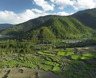 Regno del Bhutan - paesaggio dei campi di risaia Immagini Stock