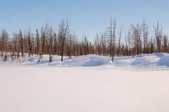 Regno della neve Immagine Stock Libera da Diritti