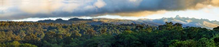 Regnskog av Mount Kenya Arkivbilder
