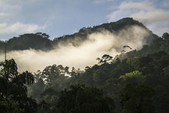 Regnskog i Sinharaja Forest Reserve, Sri Lanka Royaltyfri Foto
