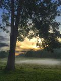 Regnskogen Royaltyfri Foto
