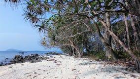 Regnskogen strand, vaggar, seglar utmed kusten, sjösidan, ön, himmel, växten som är lös, färgar, bevattnar, solsken, arkivfoto