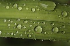 Regnsmå droppar Arkivfoton