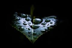 Regnsmå droppar på bladet Arkivfoton