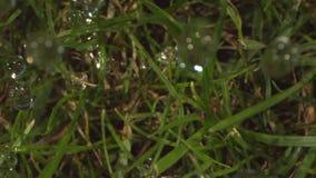 Regnsmå droppar som faller på gräs i ultrarapid som skjutas med fantomen och Laowa lager videofilmer