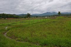 Regnstorm på risfält på Pai på Mae Hong Son Thailand Arkivfoton