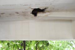Regnvattenläckor från taket orsakar skada till taket royaltyfri foto