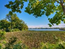 Regolazione del lago Fotografia Stock