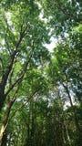 Regolazione della foresta Immagini Stock Libere da Diritti