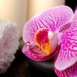 Regolazione delle pietre di zen con le gocce, ramoscello di fioritura della stazione termale Immagini Stock Libere da Diritti