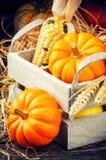 Regolazione di autunno con le zucche Immagine Stock