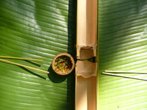 Regolazione di posto asiatica della foresta pluviale immagine stock libera da diritti