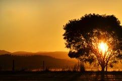 Regolazione sbalorditiva del sole di tramonto dietro l'albero, montagne Australia rurale fotografia stock libera da diritti