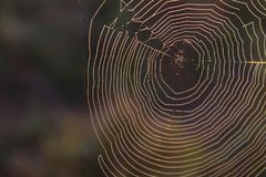 A regra de foto macro dos terços de Spiderweb Textured o contexto imagens de stock royalty free