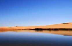 Regroupement de désert Photographie stock libre de droits