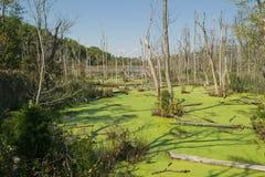 Regroupement de marée avec le cache d'algues Photographie stock libre de droits