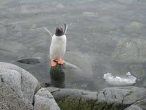 Regroupement de pingouin chez Lockroy gauche image stock