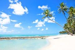 Regroupement normal dans une plage tropicale au Brésil Photographie stock libre de droits