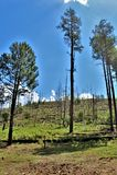 Regrowth πυρκαγιάς ροντέο-Chediski εθνικών δρυμός 2002 Sitgreaves Apache από το 2018, Αριζόνα, Ηνωμένες Πολιτείες Στοκ εικόνα με δικαίωμα ελεύθερης χρήσης