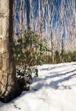 Regrowth дерева Стоковое Изображение RF