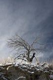 regrowth στοκ φωτογραφία με δικαίωμα ελεύθερης χρήσης