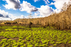 Regrowth forest after fire Stock Images