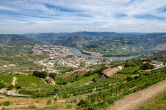 Regua, vineyars in Douro Valley Stock Images