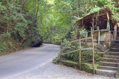 Reguera del helecho en Jamaica Imagen de archivo