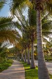 A regular street in Cancun. Street views are different in the Ca royalty free stock photos
