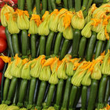 Regular zucchinis  with yellow flowers Stock Image