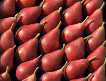 Regularly arranged pears Royalty Free Stock Photo