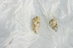 Food pellets regurgitated by a mini macaw parrot. Regurgitated food on a paper towel. Two pellets regurgitated by a mini macaw parrot. The partially digested Stock Photography