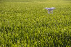 REHOVOT, ISRAEL - FEBRUARY 24, 2017: Photography quadcopte. R drone hovering over young green sprouts of wheat plant in a field Royalty Free Stock Photography